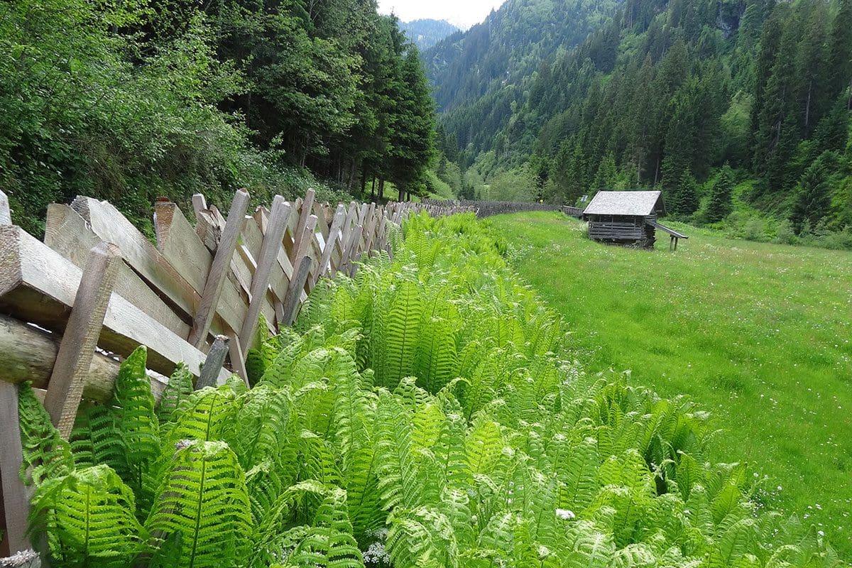 Wanderung Hollersbachtal 1