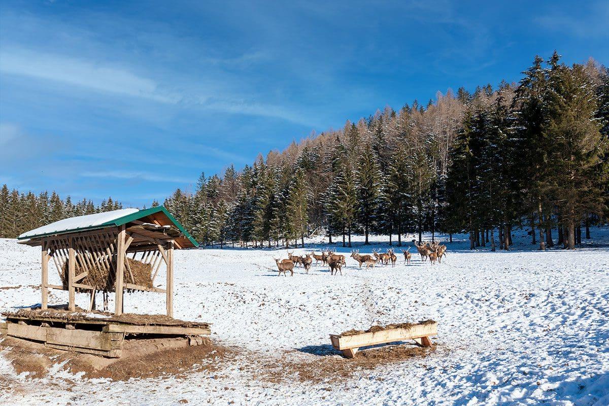 Wildtierbeobachtung in Bramberg am Wildkogel