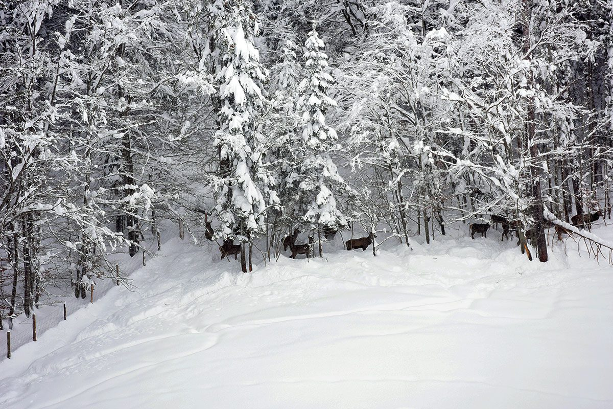 Wildtierbeobachtung in Bramberg am Wildkogel Bramberg 5